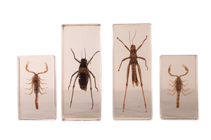 Invertebrate Specimens in Acrylic Glass