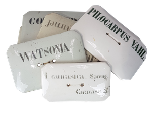 Five Ceramic Apothecary Labels