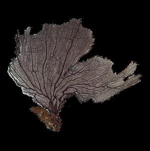 Antique Sea Fern