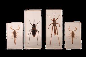 Invertebrate Specimens in Acrylic Glass
