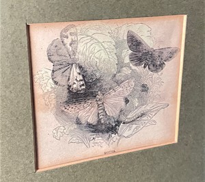 Set of Four Mounted and Framed Insect Engravings
